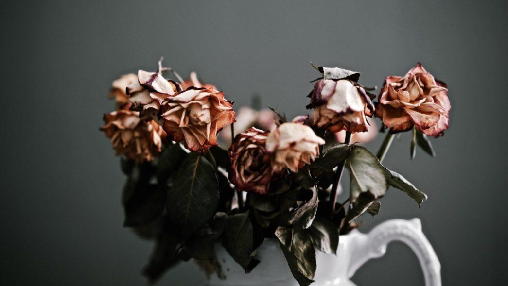 Enttäuschung verarbeiten beschrieben durch verwelkte Rosen
