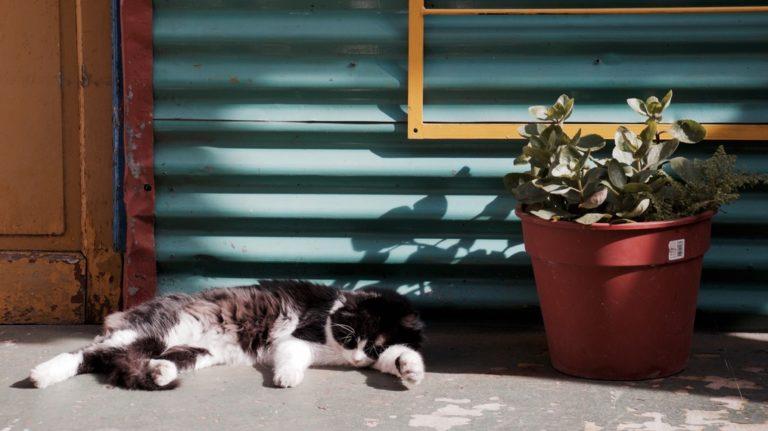 Faulheit überwinden gezeigt durch eine schlafende Katze
