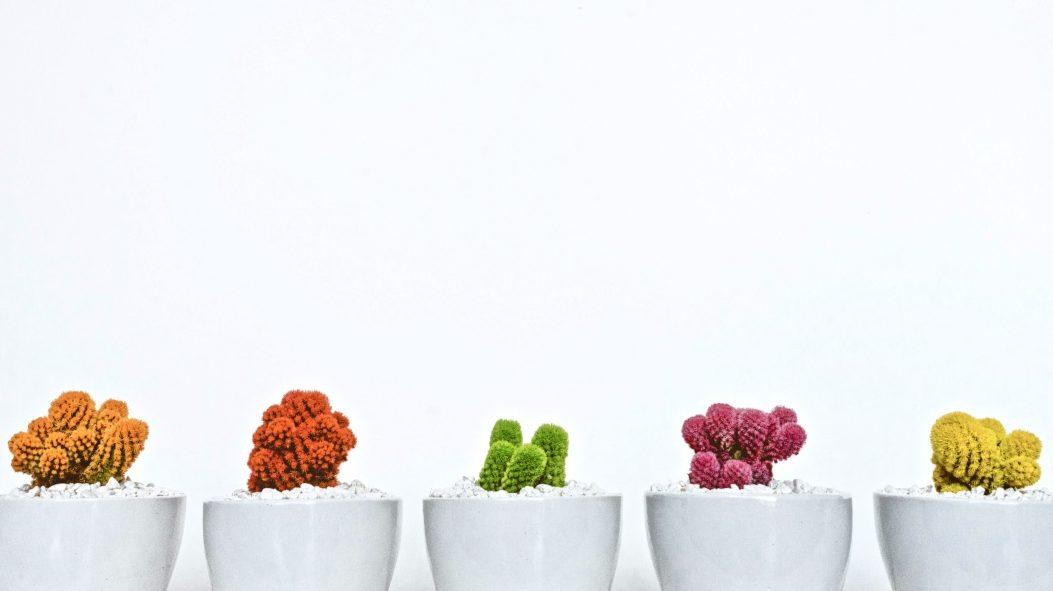 Psychografie Persönlichkeitstyp beschrieben durch verschiedenfarbige Pflanzen