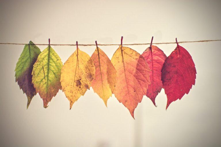 Psychografie Persönlichkeitstyp beschrieben durch unterschiedliche Blätterfarben