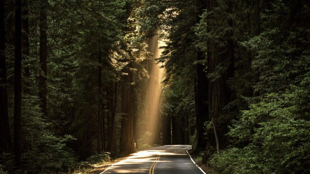 Lebensziele finden beschrieben durch einen Lichtkegel im Wald