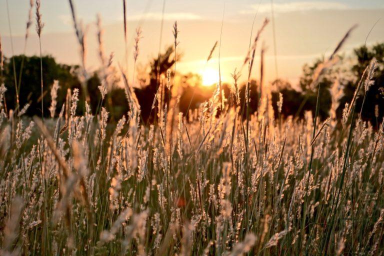 Zu sich selbst finden erklärt durch ein Feld bezeichnend für die innere Ruhe