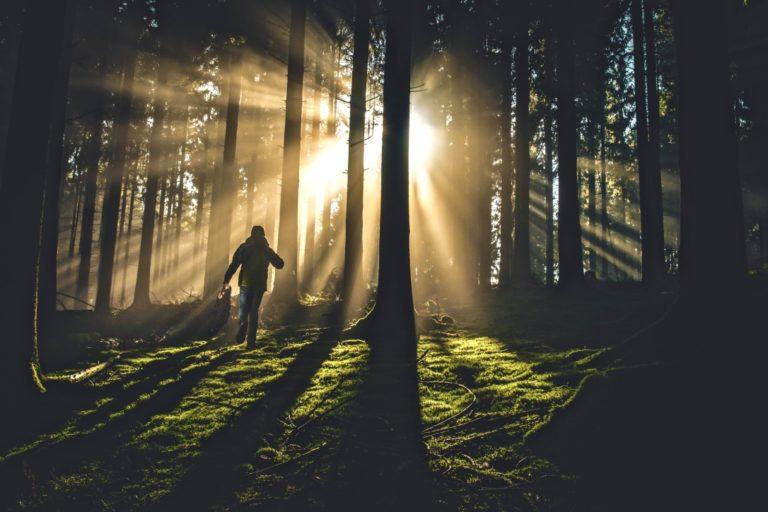 Mut zur Veränderung beschrieben durch einen Jungen, der im Wald zum Sonnenlicht läuft